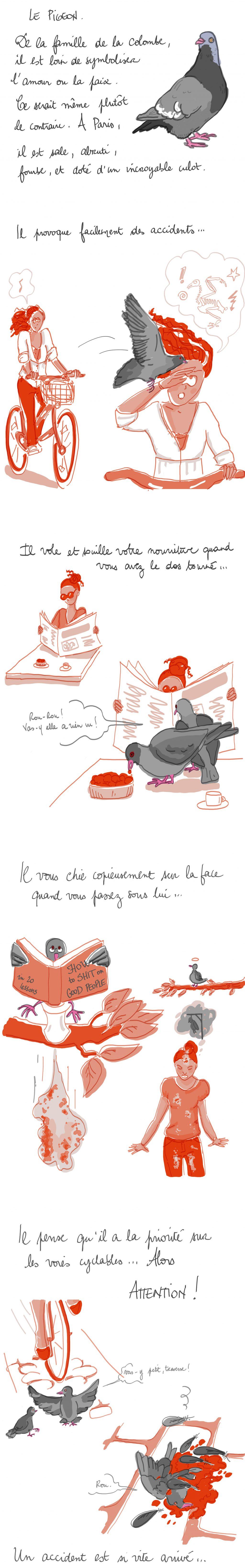 les pigeons à Paris